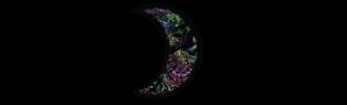 wolf-flow-logo-black (3)